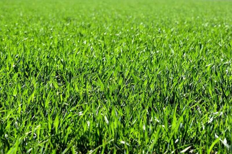 Emosionelle deprivation og græs er grønnere tænkning