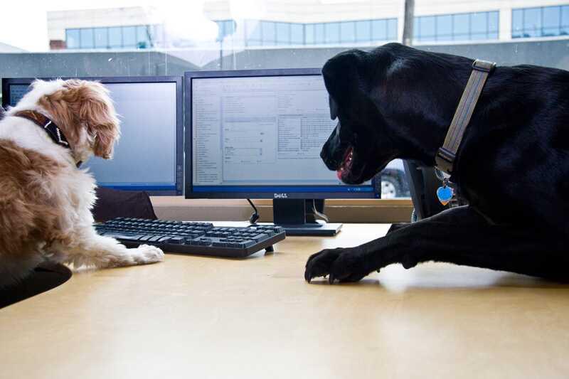 Hišni ljubljenčki v pisarni: nepričakovani viri