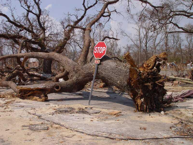 Η επέτειος του τυφώνου με άμμο: στρατηγικές για την επανεμφάνιση της φυσικής καταστροφής