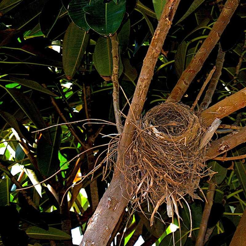 Zkoumání prázdného hnízda u dětí vyrostlo