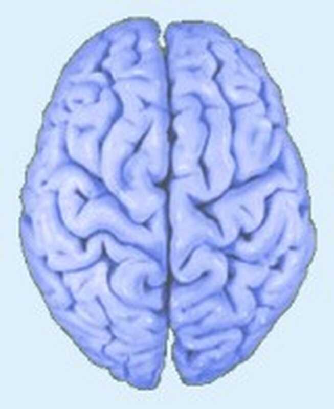 Kan terapi virkelig ændre din hjerne?