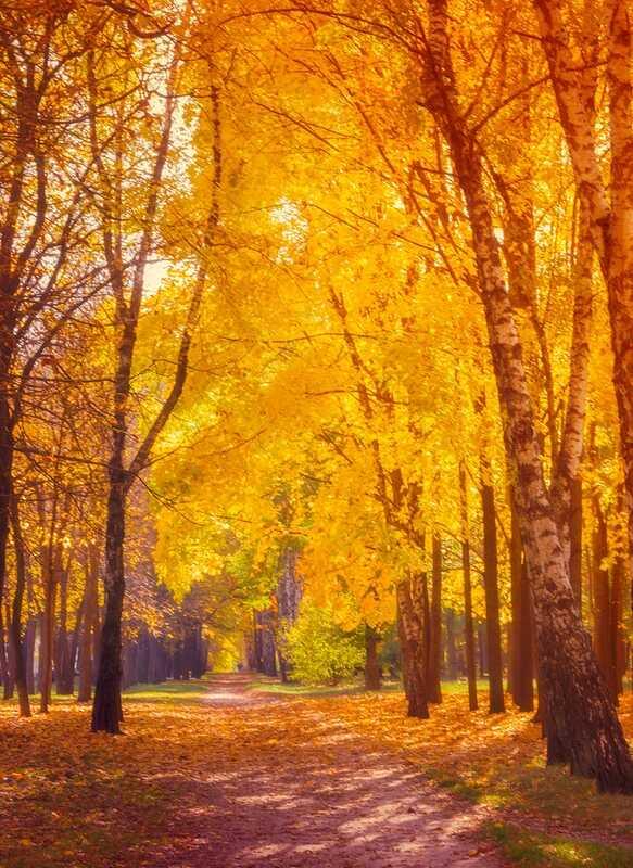 Podzimní úzkost je skutečná a léčitelná